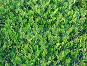 緑々しい葉っぱのテクスチャー系素材写真・フォトデータ
