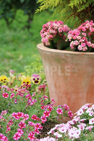 鉢に植わる花