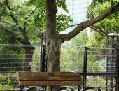 日比谷公園のベンチ