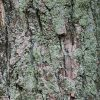 樹の幹の接写テクスチャー