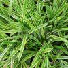 緑々しい笹の葉のテクスチャー