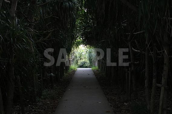 樹木に囲まれた道