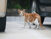 駐車場でこちらを警戒する猫