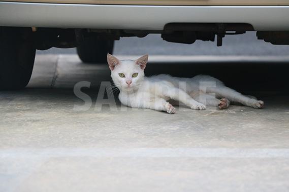 車の下で寝ていたのを起こされて不機嫌そうな猫