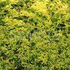 黄緑色の葉っぱのテクスチャー