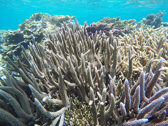 宮古島の海をシュノーケルで見る珊瑚礁