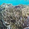 宮古島の海をシュノーケリングで見る珊瑚礁