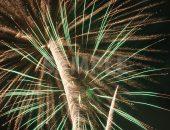 シの木を下から覗くような打ち上げ花火