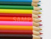 縦に整列する色鉛筆の写真