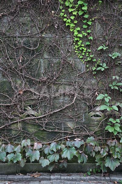 植物に覆われたブロック塀の写真
