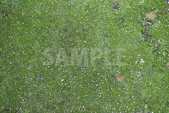 地面に生えた苔の写真