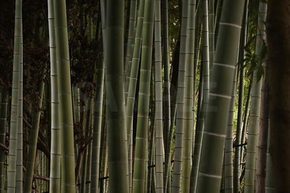 竹やぶを覗いた写真