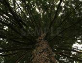 四方八方へ枝を伸ばす樹木の写真