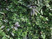 一面に広がる濡れた葉の写真