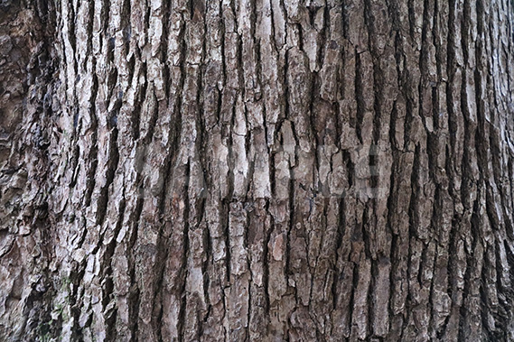 幹の表面の写真