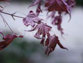 枯れた紅葉の写真・フォト素材