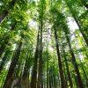 メタセコイアの森の写真