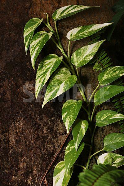 木に沿って生える植物の写真・フォト