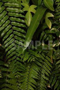 シダ系植物の写真・フォト
