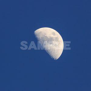 月の写真 正午月齢(7.7)月の写真,青空,moon,Month,Canon,EOS Kiss X5