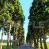 初夏の北海道・トラピスト修道院の並木道の写真