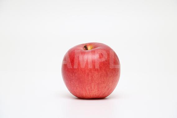 りんごの写真・フォト