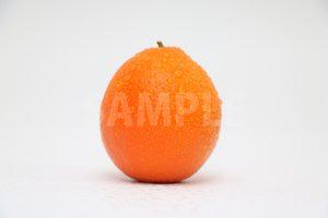 濡れたオレンジの写真・フォト