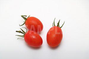 ミニトマト(アイコ)の写真・フォト素材