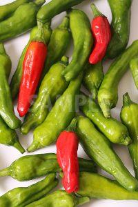 赤と緑の唐辛子が散らばるの写真・フォト素材