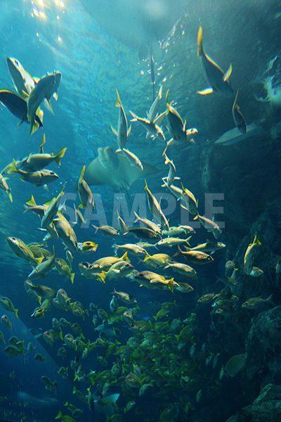 水族館の魚の群生の写真・フォト素材