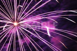 激しく飛び散る紫色の打ち上げ花火の写真・フォト素材