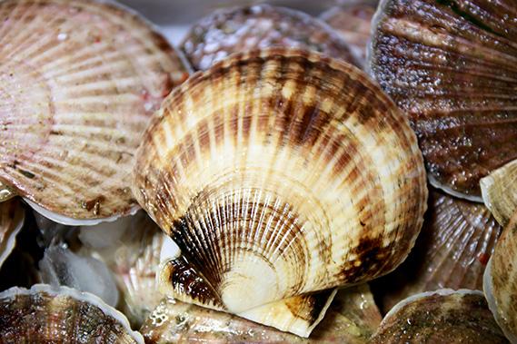 ホタテ貝の写真・フォト素材